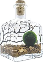 Terrarium Kit With Live Marimo Moss Balls - Small Glass Bottle Starter Set for Easy Indoor Plant Terrariums - Natural Cent...