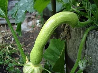 italian cucuzza squash seeds
