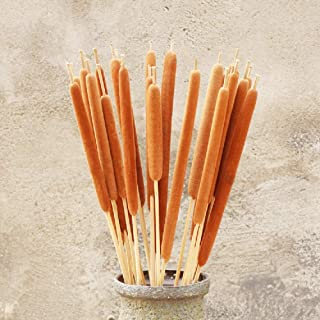 "Dried Natural Cattails, Preserved Cattails, Dry Bouquet, Wedding Flower Bunch, 20"" -24"
