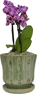 TRENDSPOT 5IN Orchid Pot Taper, Green White Indoor Planter, 5 inch