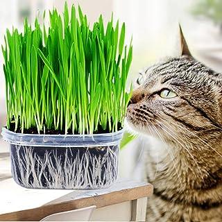 Etopfashion 猫草の種 猫草栽培のシード 約400Pcs 毛を吐き出させ胃を守る 猫の必需品 猫が好きな草のタネ 栄養 草 ビタミンに富む ストレス解消 猫の胃腸消化に役に立つ
