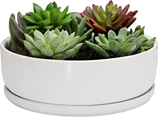 SQOWL 8 inch White Round Ceramic Succulent Planter Pot Modern Flower Cactus herb Big Planter with Removable Saucer Indoor or Outdoor