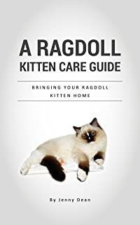 Best ragdoll kitten wanted Reviews