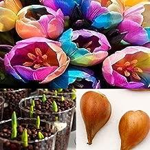 SILKSART 5 Nice Bulbs! Tulip Bulbs early bloom Perennial Bulbs for Garden Planting Beautiful Flower--SHIPPING NOW!!!