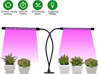 Best indoor plants and succulents Reviews