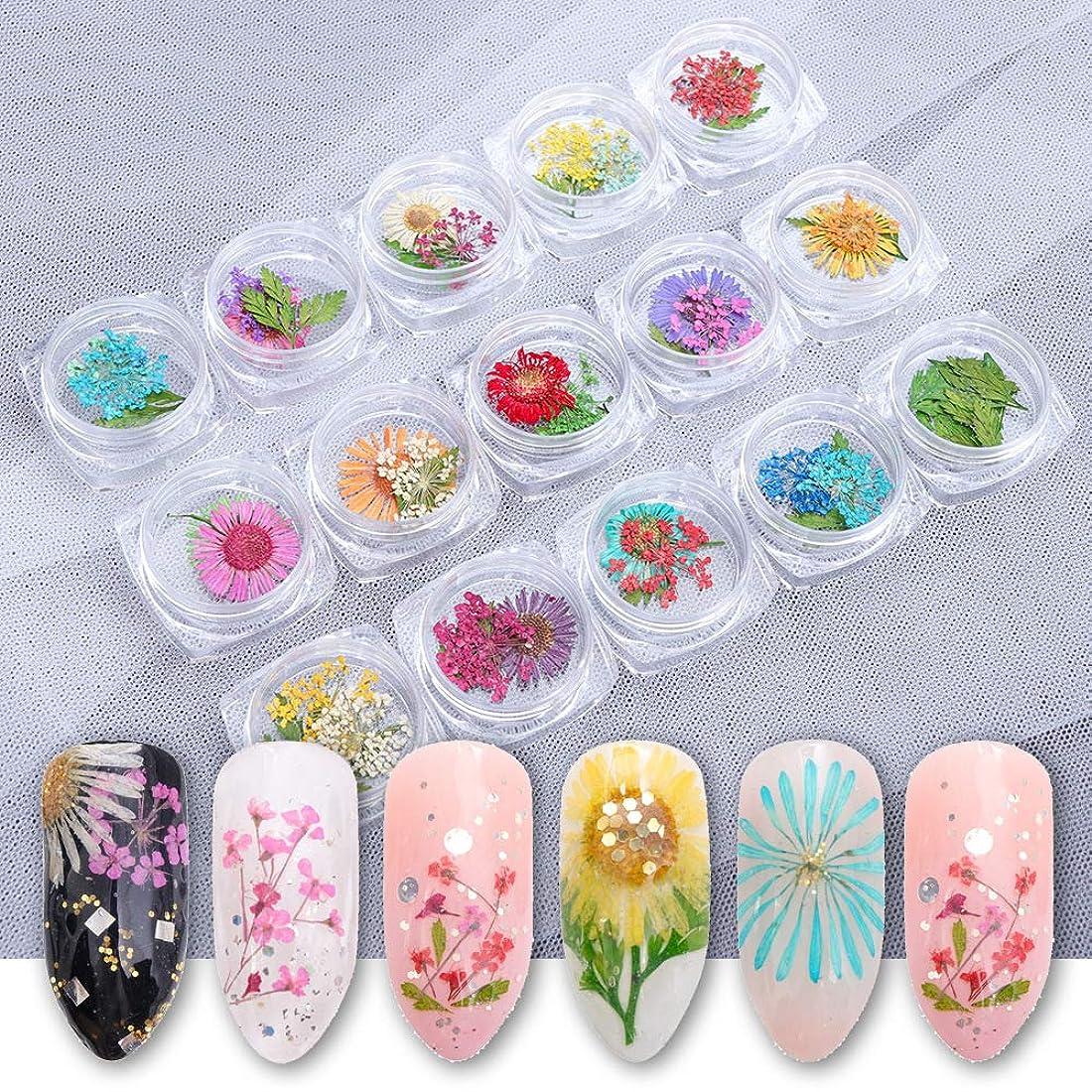 世界記録のギネスブックリーダーシップ欠如15箱ネイルステッカーの装飾の星空と5枚の花弁の花のための高品質の押された花15次元3Dカラーアップリケネイルシール用品15色(花+葉)
