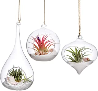Mkono 3 Pack Glass Hanging Planter Air Fern Holder Terrarium Plants Hanger Vase Home Decoration for Succulent Moss Tillandsias Air Plants, Olive, Globe and Teardrop