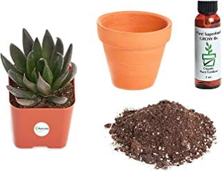 Best black knight succulent Reviews
