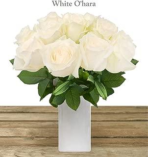 WHITE OHARA GARDEN ROSE 40-50CM-PACK 48 STEMS - LOOKS LIKE PEONIES