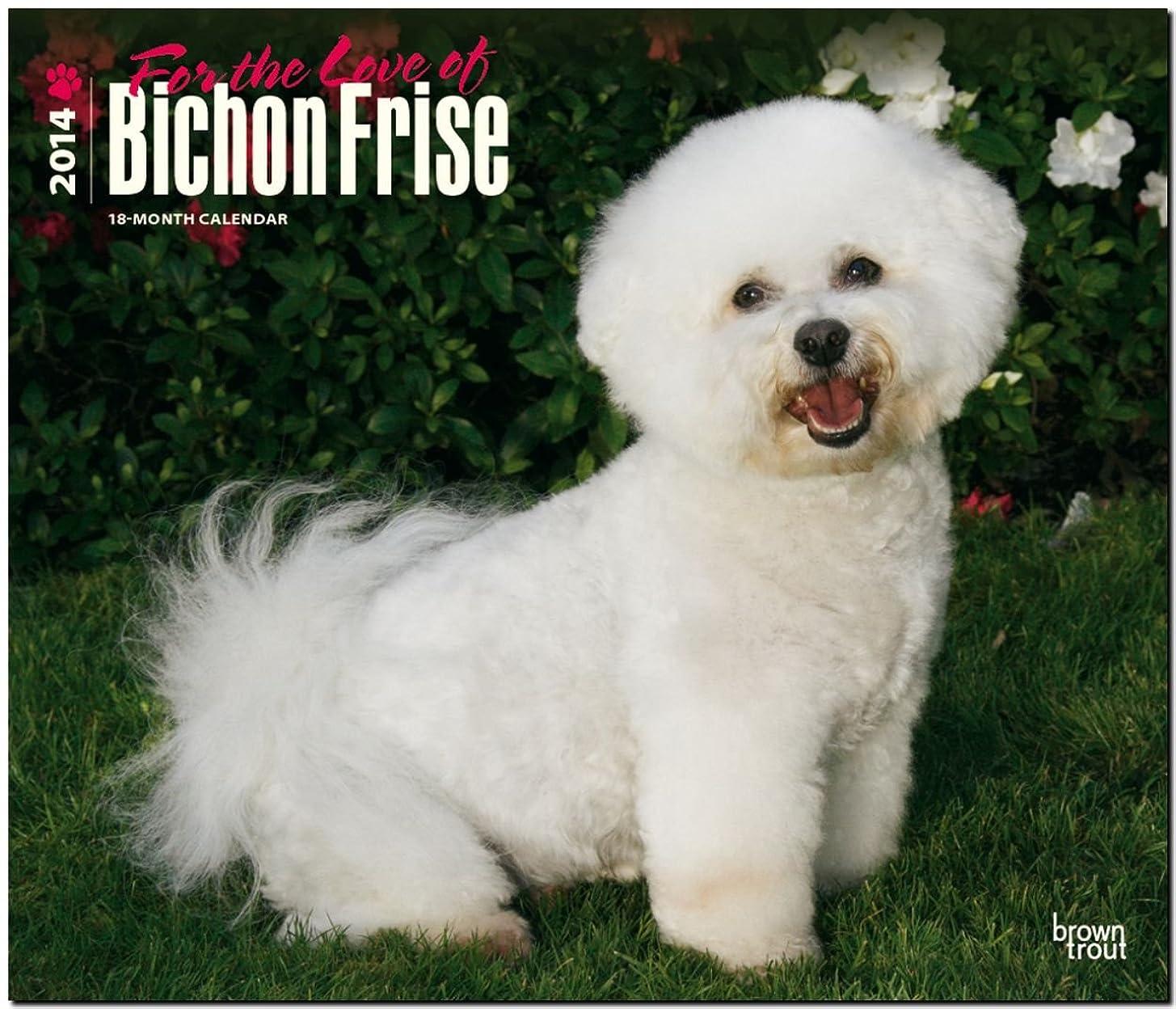 セラーエスカレーターに頼るFor the Love of Bichon Frise 2014 Calendar 18-Month