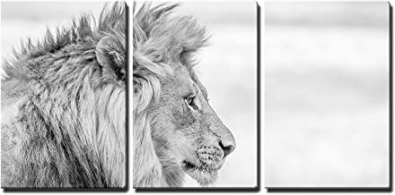wall26 - 3 Piece Canvas Wall Art - Side Profile of a Lion in Black and White in The Kruger National Park, South Africa. - Modern Home Decor Stretched and Framed Ready to Hang - 24