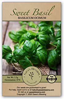 Gaea's Blessing Seeds - Sweet Basil Seeds (1500 Seeds) Non-GMO Large Leaf Italian Heirloom Genovese Pesto Open-Pollinated ...