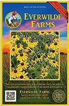 Everwilde Farms - 2000 Sweet Black-Eyed Susan Native Wildflower Seeds - Gold Vault Jumbo Seed Packet
