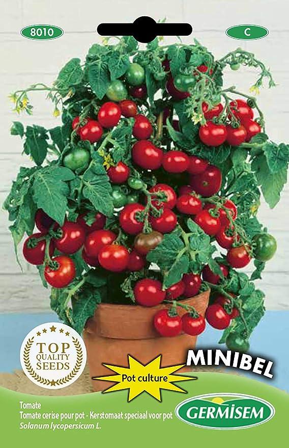 74 opinioni per Germisem Minibel Semi di Pomodoro 0.5 g