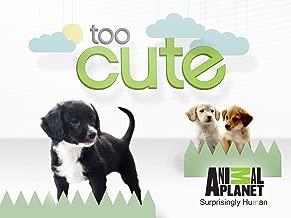 Best too cute puppy power Reviews