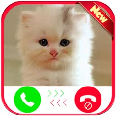 -> Support High-quality video -> Schedule fake Voice Call From Tiny Cat 🐈. -> Quick fake Voice Call From Tiny Cat 🐈. -> Show your face on the video chat screen using front camera -> Simulate a fake Voice Call From Tiny Cat 🐈 chat screen