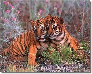 Best tiger cubs 2 Reviews