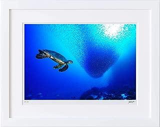 【写真工房アートフォト 額装写真】 タイマイとイワシの群れ/アリ環礁/モルディブ(ホワイト 大判サイズ 557mm×442mm)
