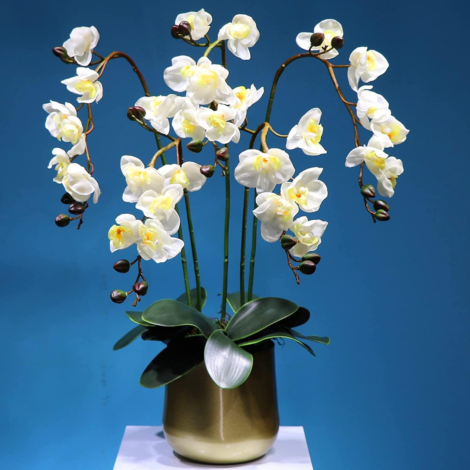 Quisilife Genuine Free Shipping Artificial SALENEW very popular! Orchid Flower P Set Stems Bonsai