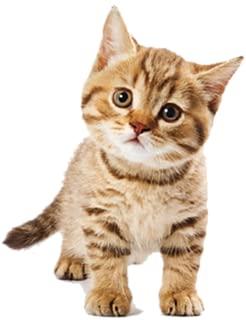 Best cat sound application Reviews