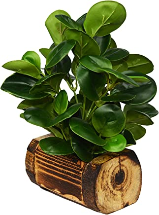 Fancy Mart Artificial Rubber Plant in Buckle Wood Pot (28 cms / 11 inchs)