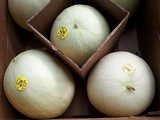 メキシコ産 ハネジューメロン(honeydew melon)5~6玉(約12kg)