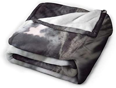 """PYTTMSFOR Blue Great Dane Ultra-Soft Flannel Blanket,Micro Plush Blanket,Lightweight Warm Bed Throws for Bed&Sofa(50""""X40"""")"""