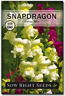 Sow Right Seeds - Tetra Mix Snapdragon Flower Seeds for Planting, Beautiful Flowers to Plant in Your Garden; Non-GMO Heirl...