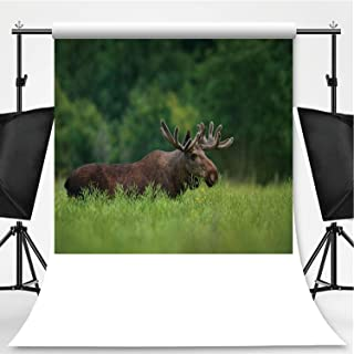 Bull Moose in canola Field Photography Background,116174 for Photography,Flannelette:5x7ft