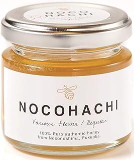 NOCOHACHI/のこはち/レギュラー
