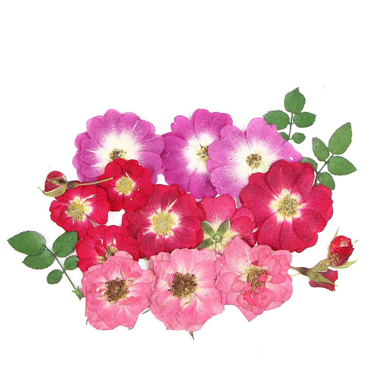 Monrocco 19Pcs Mixed Size Real Pressed Dried Flowers Dried Pressed Rose Flowers for Card Making Jewelry Resin Crafts