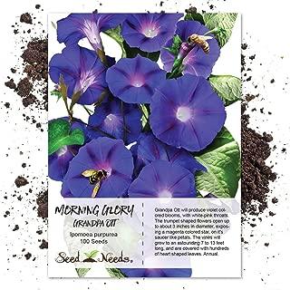 Package of 100 Seeds, Grandpa Ott Morning Glory (Ipomea purpurea) Non-GMO Seeds By Seed Needs