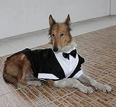 bulldog attire