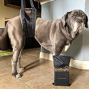 Loobani Portable Dog Sling for Back Legs