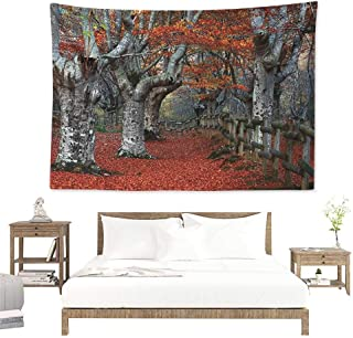 Angel-LJH Seasons,Bedding Tapestry Dreamy Gated Beech Trees Forest with Fall Leaf Mother Earth Natural Wonders Theme 93W x 70L Inch Bedspread Picnic Grey Red