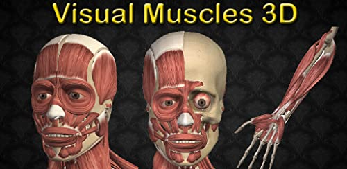 『Visual Muscles 3D』のトップ画像