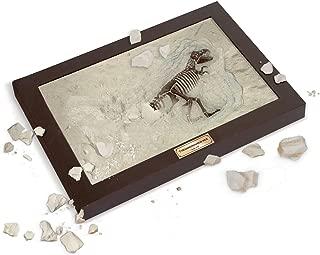 Uncle Milton Dr. Steve Hunters - Paleo Lab Excavation T. Rex Dig - Scientific Educational Toy
