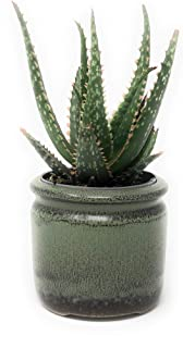 Premium Succulent Planter Cache Pot, Ceramic with Decorative Patina Glaze, Kitchen, Living Room, and Home Decor, Display P...