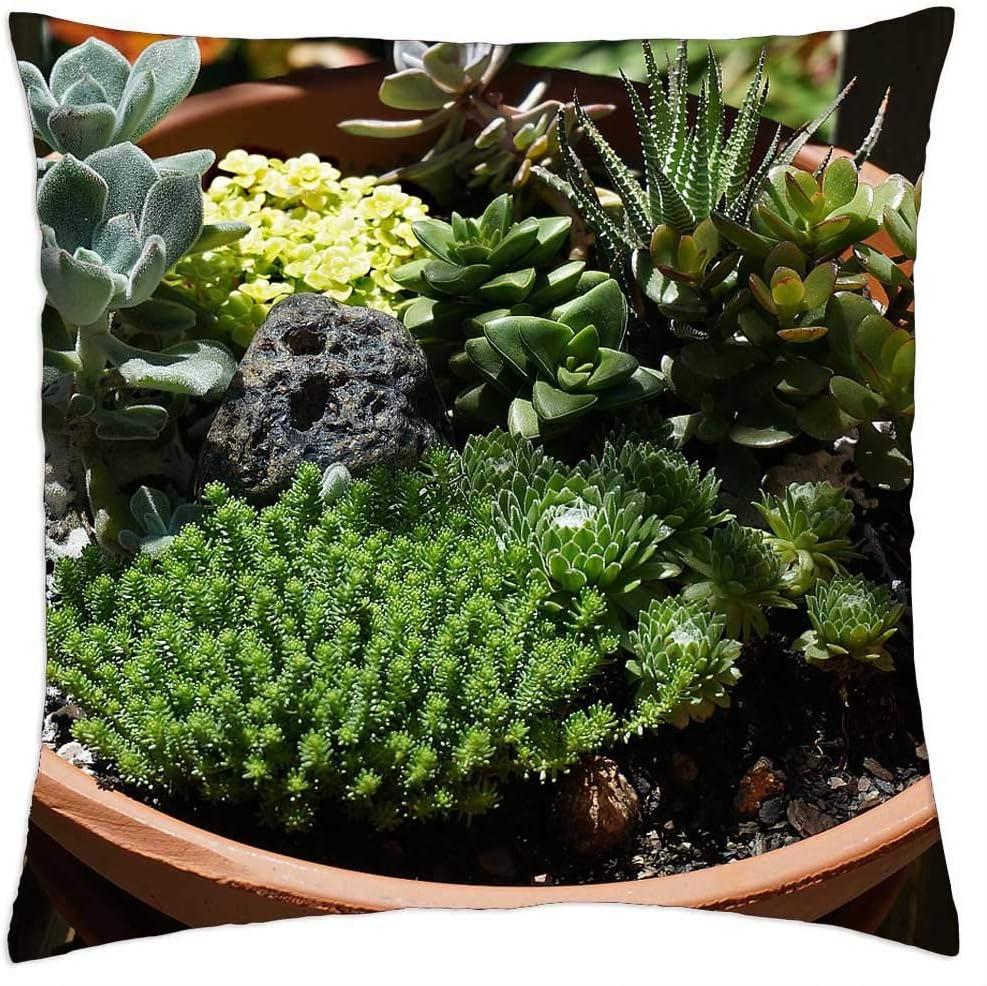 LESGAULEST Throw Oakland Mall Regular dealer Pillow Cover 16x16 Succulent Garden - Su inch