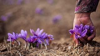 5 Saffron Plant Bulbs - Crocus Sativus - The World's Most Expensive Spice