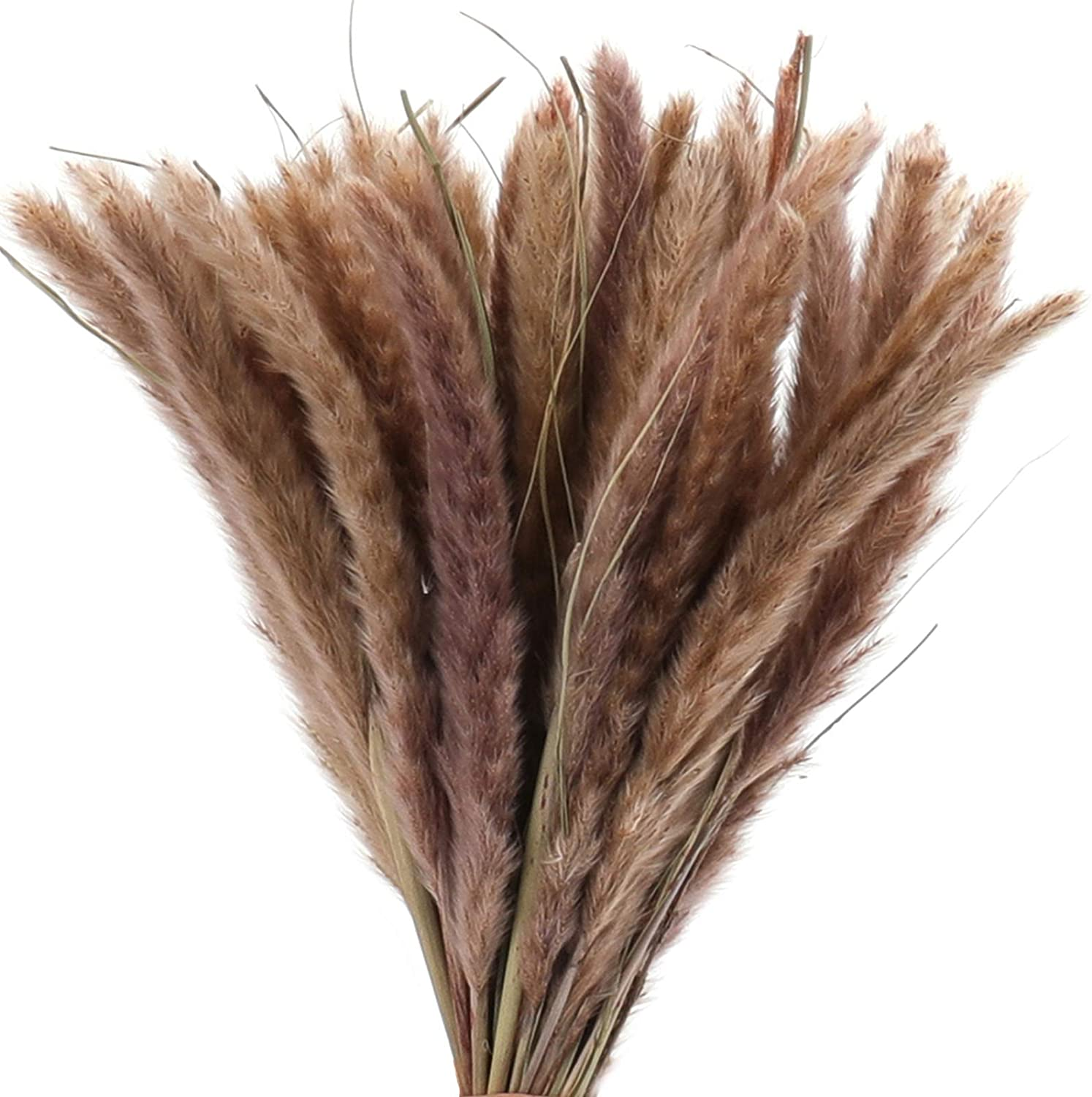 Great interest yarlung 45 Pieces 17 Inch Natural Dried Grass Phrag Financial sales sale Pampas Reed