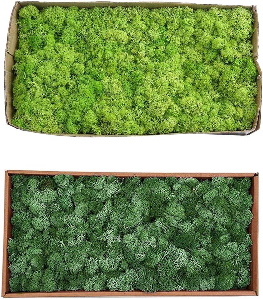 Artificial and Attention brand Dried Flower Omaha Mall 2pcs Norwegian Reindeer Moss Natural