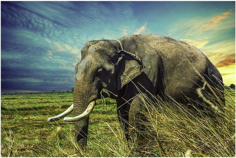 Los mejores precios y los estilos más frescos. RQQFBH Art Pictures Pictures Pictures Frame 1 Piece Elephant Nature Animal Pintura para La Sala De Estar Moderno Impreso Classic Poster  lo último