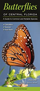 Butterflies of Central Florida: A Guide to Common & Notable Species