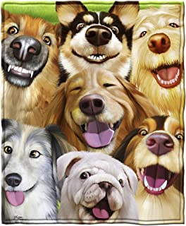 dogs face on a blanket