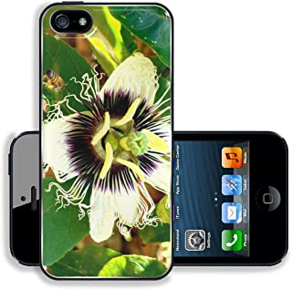 MSD Premium Apple iPhone 5 iphone 5S Aluminum Backplate Bumper Snap Case Carpenter Bee Xylocopa frontalis pollen a flower of Passion fruit Passiflora edulis Image 3453153619