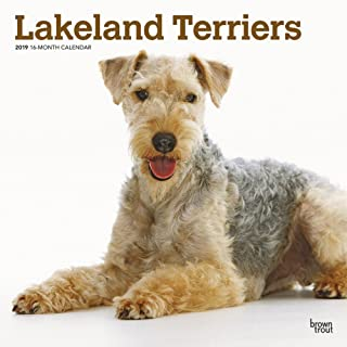 lakeland terrier calendar