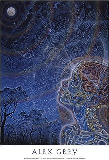 Amazon com: Alex Grey - Posters & Prints / Wall Art: Home
