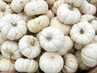 Baby Boo Pumpkin 25 Seeds