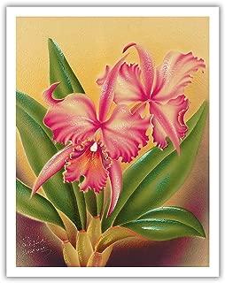 Pacifica Island Art Cattleya Orchid Hawai'i - The Queen of Orchids - Vintage Hawaiian Airbrush Art by Frank Oda (Hale Pua Studio) c.1940s - Hawaiian Fine Art Print - 11in x 14in